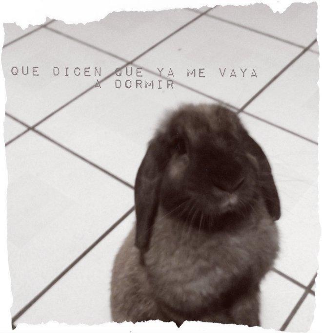 Pensamiento de un conejo I